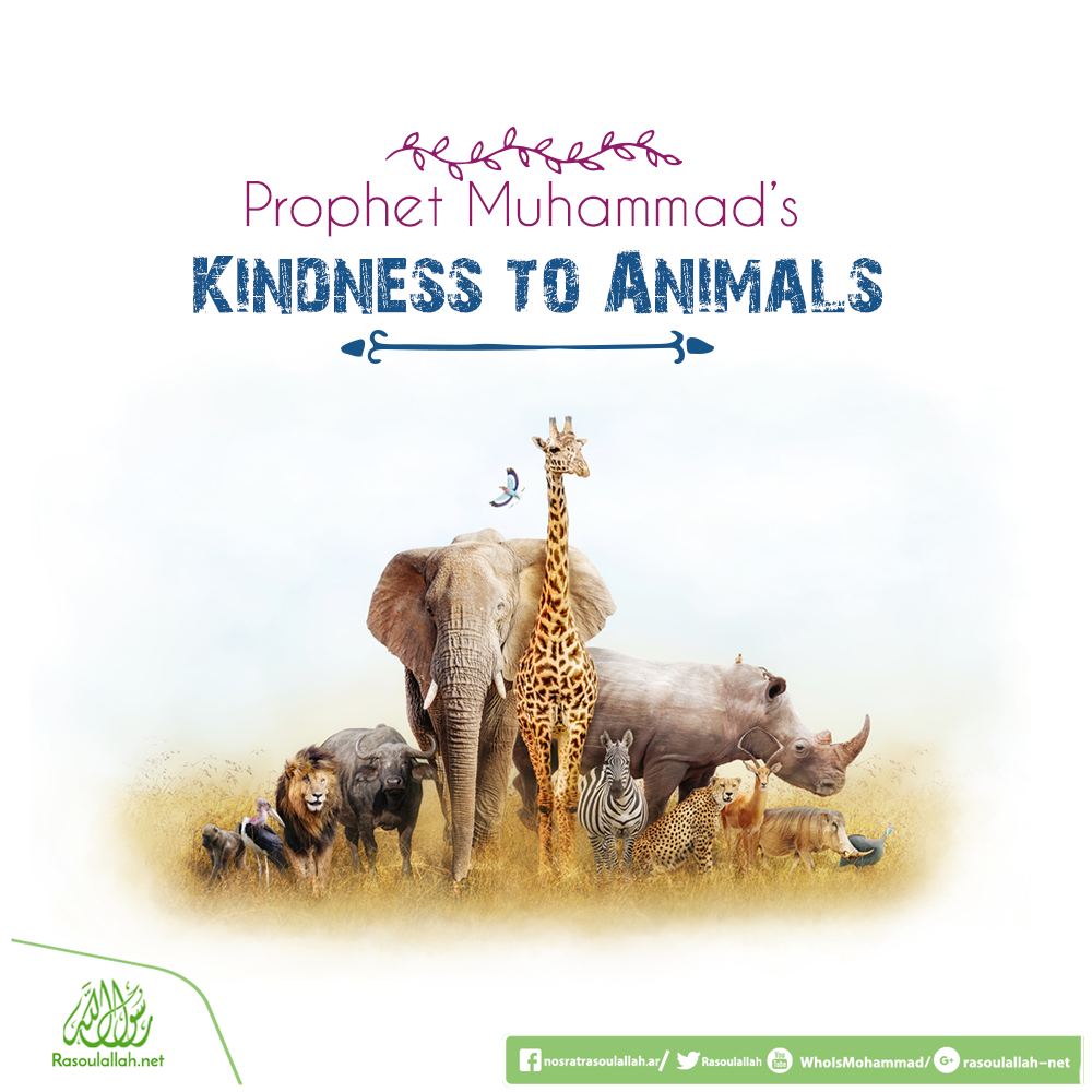 PROPHET MUHAMMAD'S KINDNESS TO ANIMALS | Supporting Prophet